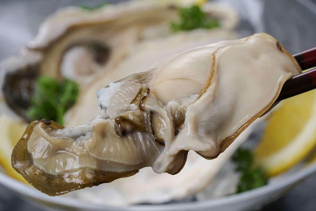 箸で持ち上げた生牡蠣、厚岸産の牡蠣まるえもんのむき身を箸で持ち上げる