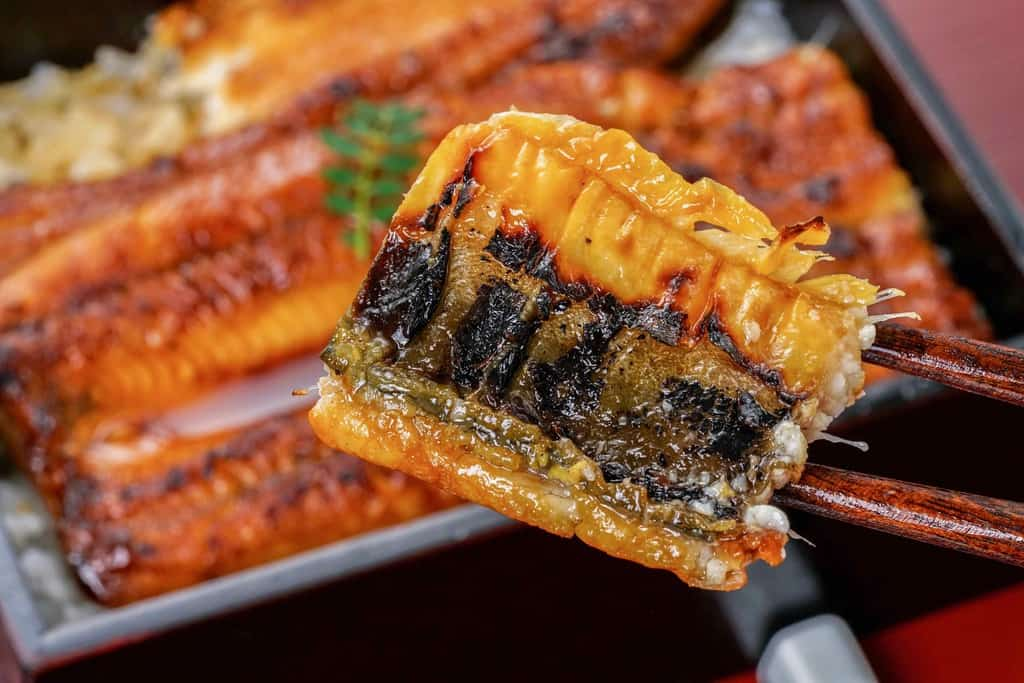 鰻の蒲焼きの皮の焼き目が見えるよう箸で持つ、ウナギの蒲焼の焼き目