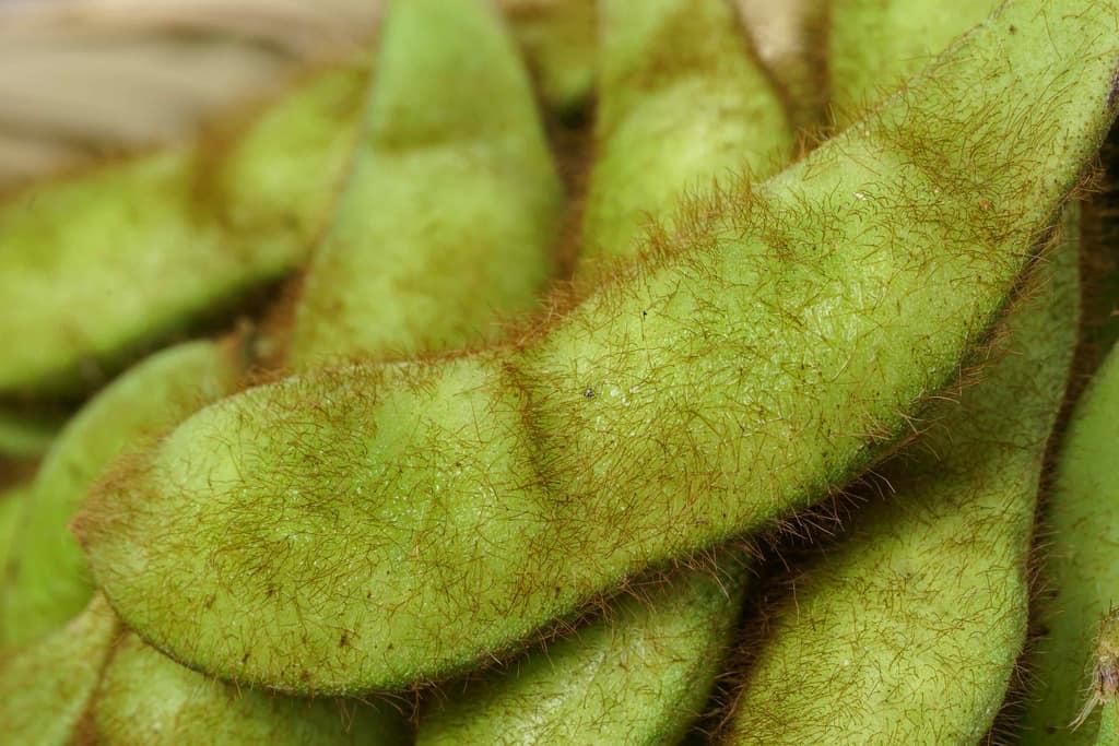 山形県の浦田農園の有機毛豆を接写、産毛が見える毛豆
