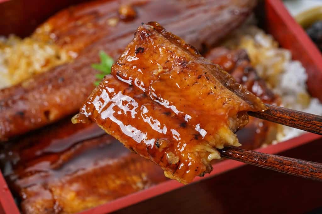 うなぎ屋たむろの特大ウナギ蒲焼を箸でつまむ