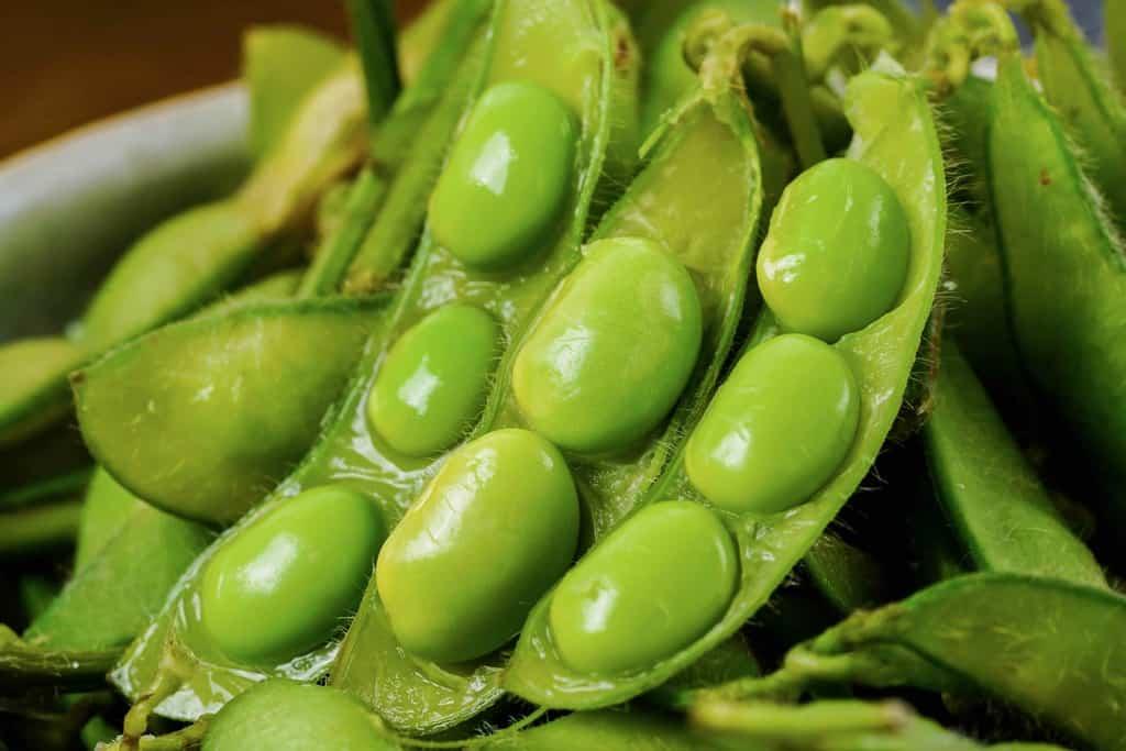 茹で枝豆の莢の中の豆、鮮やかな緑色の枝豆