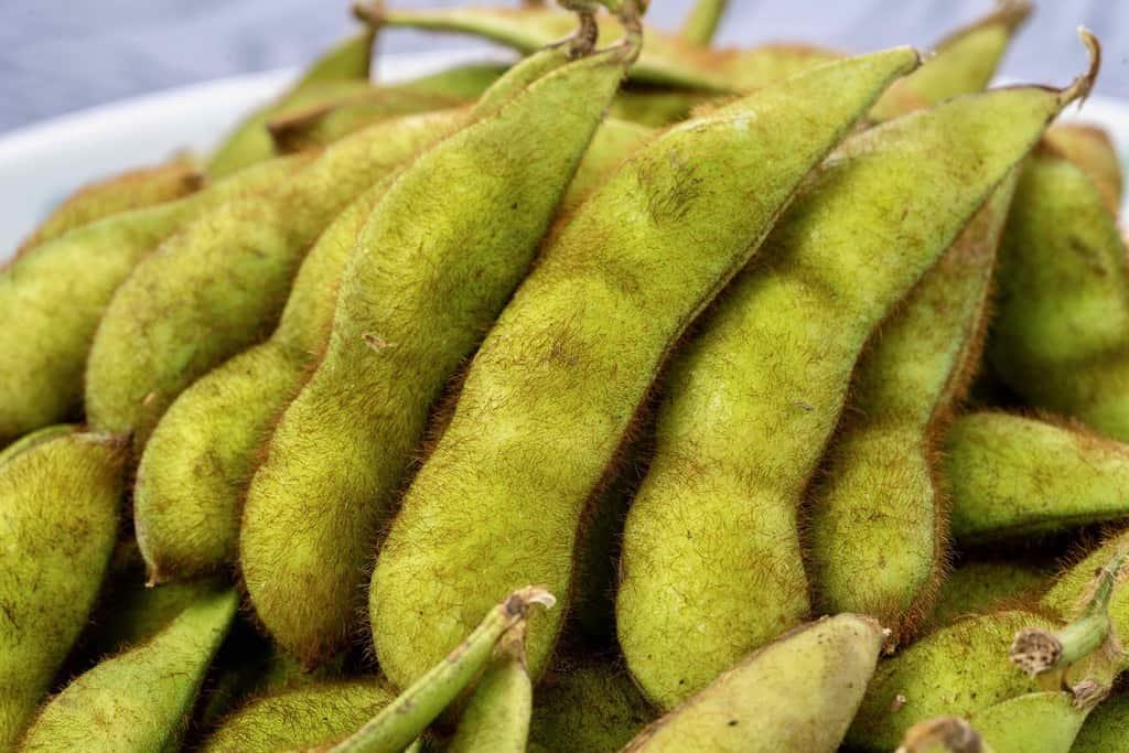青森県津軽地方の毛豆枝豆、いたや毛豆